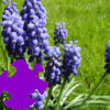 Fairy Bells Jigsaw A Free Jigsaw Game
