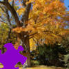 Fall Tree Jigsaw A Free Jigsaw Game