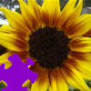 Harvest Sunflower Jigsaw A Free Jigsaw Game