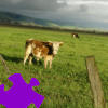 Pasture Jigsaw A Free Jigsaw Game