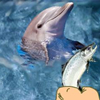 Hungry Dolphin Game A Free Shooting Game