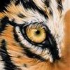 Eye of the Tiger A Free Puzzles Game