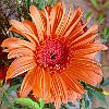 Elegant Fall Jigsaw A Free Jigsaw Game