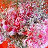 Play Carnation Topiary Jigsaw