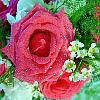 Brides Maid Bouquet Jigsaw A Free Jigsaw Game