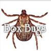 Box Bugs