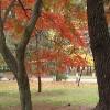Jigsaw: Autumn Colors