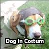 Dog in Costum