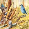 Art Painting Bird Sliding Puzzle