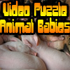 Solve four video-puzzles with neat little animal-babies! Hurry up to be the best in the highscore!