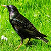 Hidden Emeralds: Birds A Free Puzzles Game