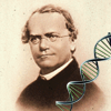 Mendel Quiz (Genetics) A Free Education Game