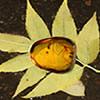 Hidden Ambers - Nature