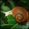 Kind of Snail