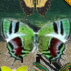 Hidden 120 Butterflies 2 A Free Education Game
