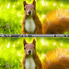Squirrel Difference A Free Adventure Game