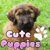 Cute Puppies A Free BoardGame Game