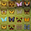 Butterfly Connect A Free Puzzles Game