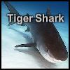 Tiger Shark A Free Puzzles Game