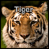 Complete the pieces of Tiger picture