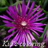 Kingdom of the flowers: Purple beauty