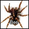 Complete the pieces of Spider picture