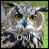 Owl A Free Puzzles Game
