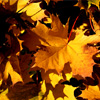 Autumn Leafs Jigsaw