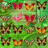 Butterfly Match A Free Puzzles Game
