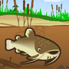 Catfish Fry A Free Action Game