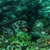 Underwater Mysteries A Free BoardGame Game