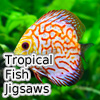 Tropical Fish Jigsaw Tournament A Free Education Game