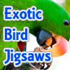 Exotic Bird Jigsaw Tournament