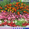 Hidden Hearts - Flower Garden