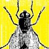 Annoying fly