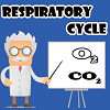 Respiratory Cycle A Free Action Game