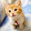 The cute cat puzzles game