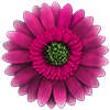 FlowerCare