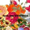 Spot The Difference! Go through the levels and spot the differences.