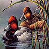 Fabulous ducks hidden numbers A Free Puzzles Game