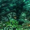 Sea Neptune Enigma