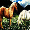 Fantastic horses hidden numbers Game. Find the hidden numbers and go to the next level.