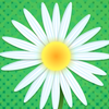 Daisy Petals A Free Strategy Game