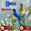Birds Similarities A Free Action Game