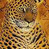 Fabulous tigers hidden numbers A Free Puzzles Game