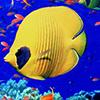 Fish Puzzle Gold