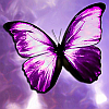 butterfly memory game A Free Education Game