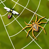 Spider Web A Free Action Game