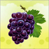 Grapes A Free Education Game