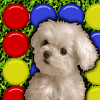 Cute Puppy Match A Free Action Game